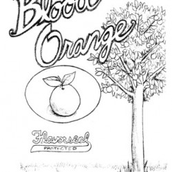 Blood Orange by Justin Giampaoli & Grant Lee